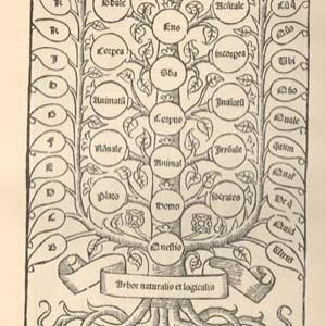 L'albero delle relazioni logiche, secondo un'edizione del 1512 della Logica nuova.