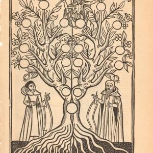 Représentation de l'Arbre éviternel de l'Arbre de science, selon une édition de 1505.